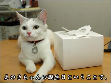 えのきちゃんの誕生日当日-1コマ
