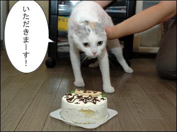 えのきちゃんの誕生日当日-4コマ
