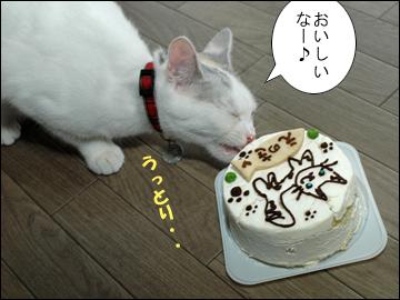 えのきちゃんの誕生日当日-6コマ