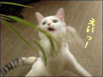 草食系ネコ-5コマ