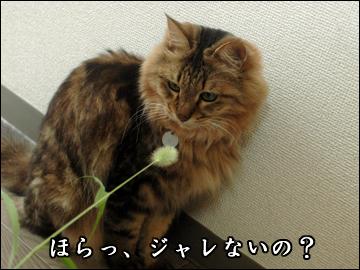 ネコ兄さんと草-3コマ
