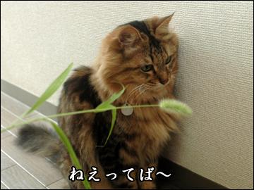 ネコ兄さんと草-4コマ