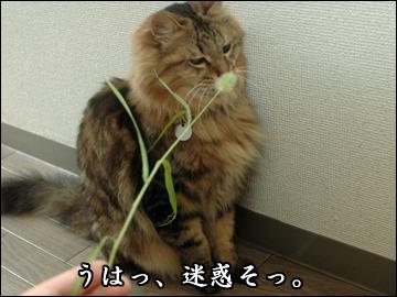 ネコ兄さんと草-5コマ