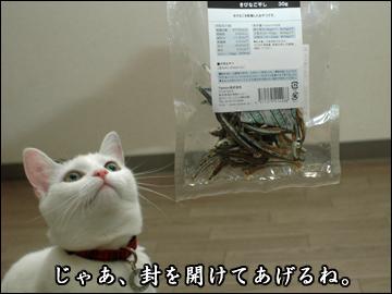 お魚おやつ-2コマ