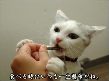 お魚おやつ-5コマ