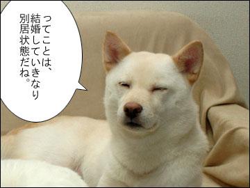 羽田 & 成田-7コマ