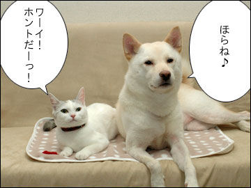 森田県知事のコメント-2コマ