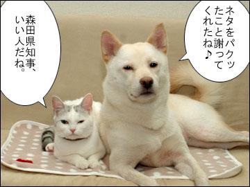 森田県知事のコメント-3コマ