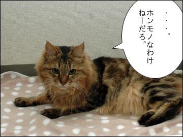 森田県知事のコメント-4コマ