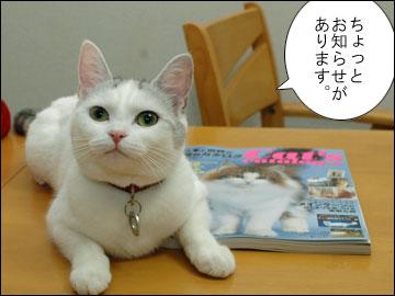 Cat's catalog-1コマ