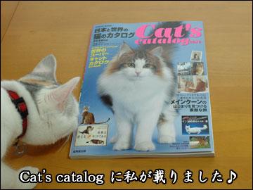 Cat's catalog-2コマ