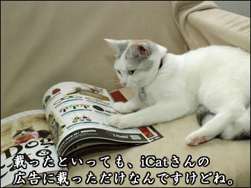 Cat's catalog-3コマ