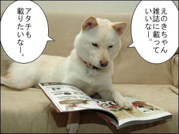 Cat's catalog-4コマ