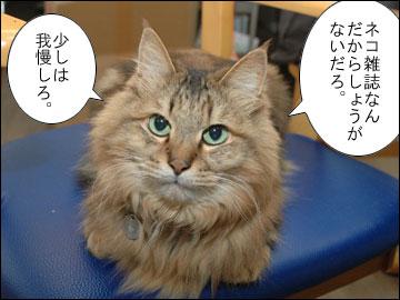 Cat's catalog-5コマ