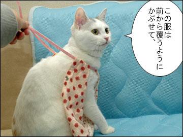 えのきの術後服-3コマ