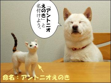 えのきちゃんからの残念賞-9コマ
