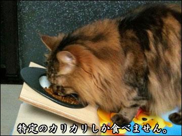 食にうるさい-2コマ