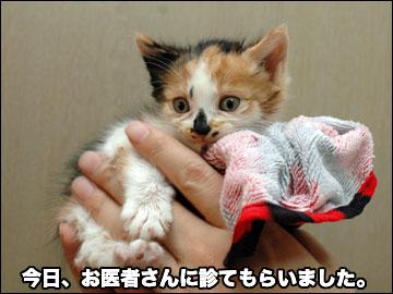 子猫を保護しました-4コマ