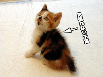 見慣れぬ子猫さん-3コマ