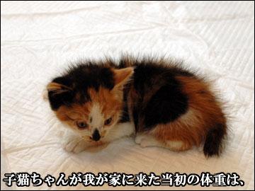 子猫さんの成長-1コマ