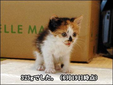 子猫さんの成長-2コマ