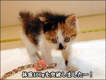 子猫さんの成長-5コマ