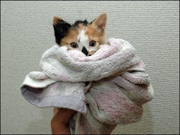子猫さんの旅立ち-1コマ