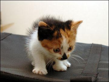 子猫さんの旅立ち-6コマ