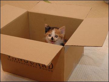 子猫さんの旅立ち-7コマ