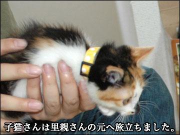 子猫さんの新しい家族-1コマ