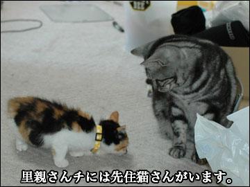 子猫さんの新しい家族-2コマ