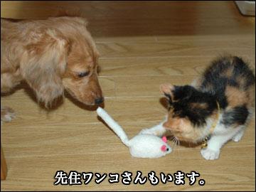 子猫さんの新しい家族-3コマ