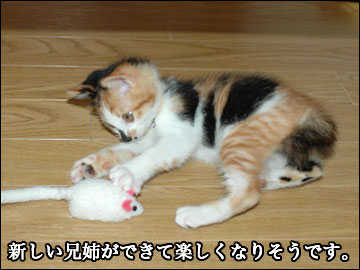 子猫さんの新しい家族-4コマ