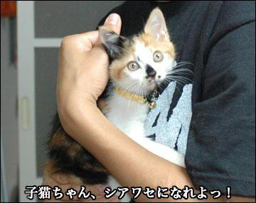 子猫さんの新しい家族-6コマ