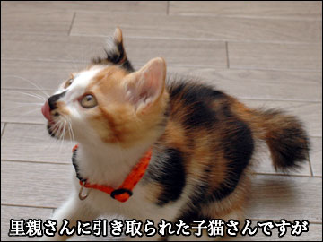 子猫さんの名前-1コマ