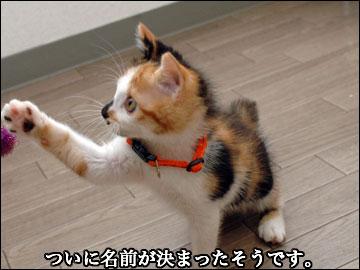 子猫さんの名前-2コマ