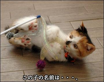 子猫さんの名前-3コマ