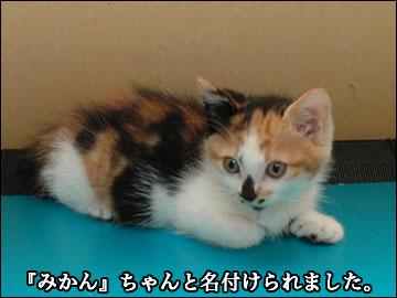 子猫さんの名前-4コマ