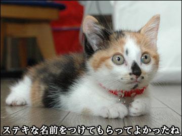 子猫さんの名前-5コマ