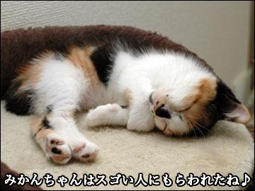みかんちゃんの寝顔-1コマ