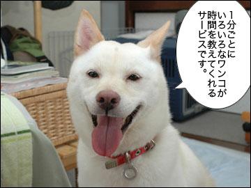 美犬時計-2コマ