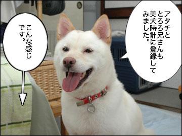 美犬時計-3コマ