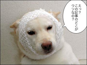日本で一番暑い夏-4コマ
