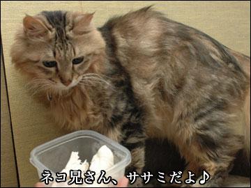 ネコ兄さんとササミ-1コマ