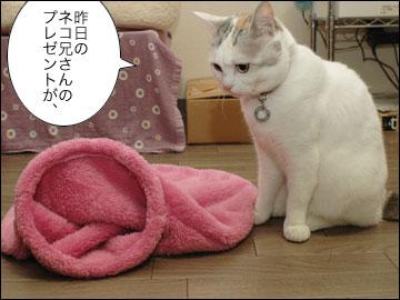ネコ兄さんのプレゼント-1コマ