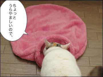 ネコ兄さんのプレゼント-2コマ