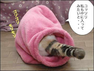 ネコ兄さんのプレゼント-3コマ