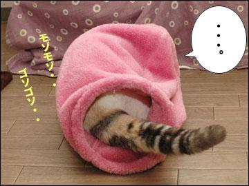 ネコ兄さんのプレゼント-4コマ