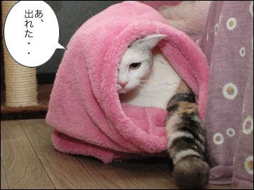 ネコ兄さんのプレゼント-7コマ