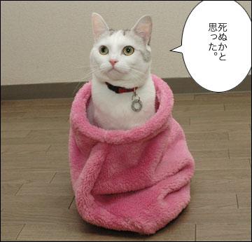 ネコ兄さんのプレゼント-8コマ